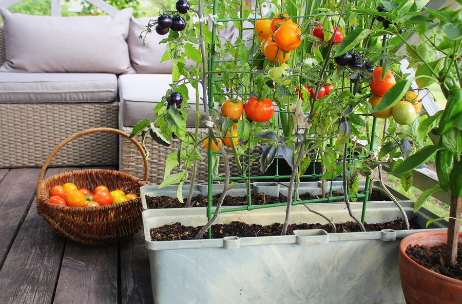 Three Ways to Grow Fresh Vegetables When Space is Limited