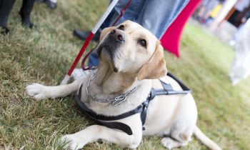 Does Your Elderly Loved One Need an Assistance Dog?